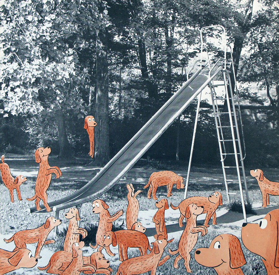 Dogs and Slide