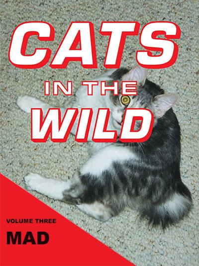 Julia Dzwonkoski and Kye Potter Cats in the Wild: Mad